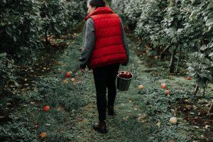 """local saison 300x200 - Comment relever le défi """"février sans supermarché"""" ? - Hopika - Le guide des sorties eco-friendly sur les 2 Savoie et aux alentours"""